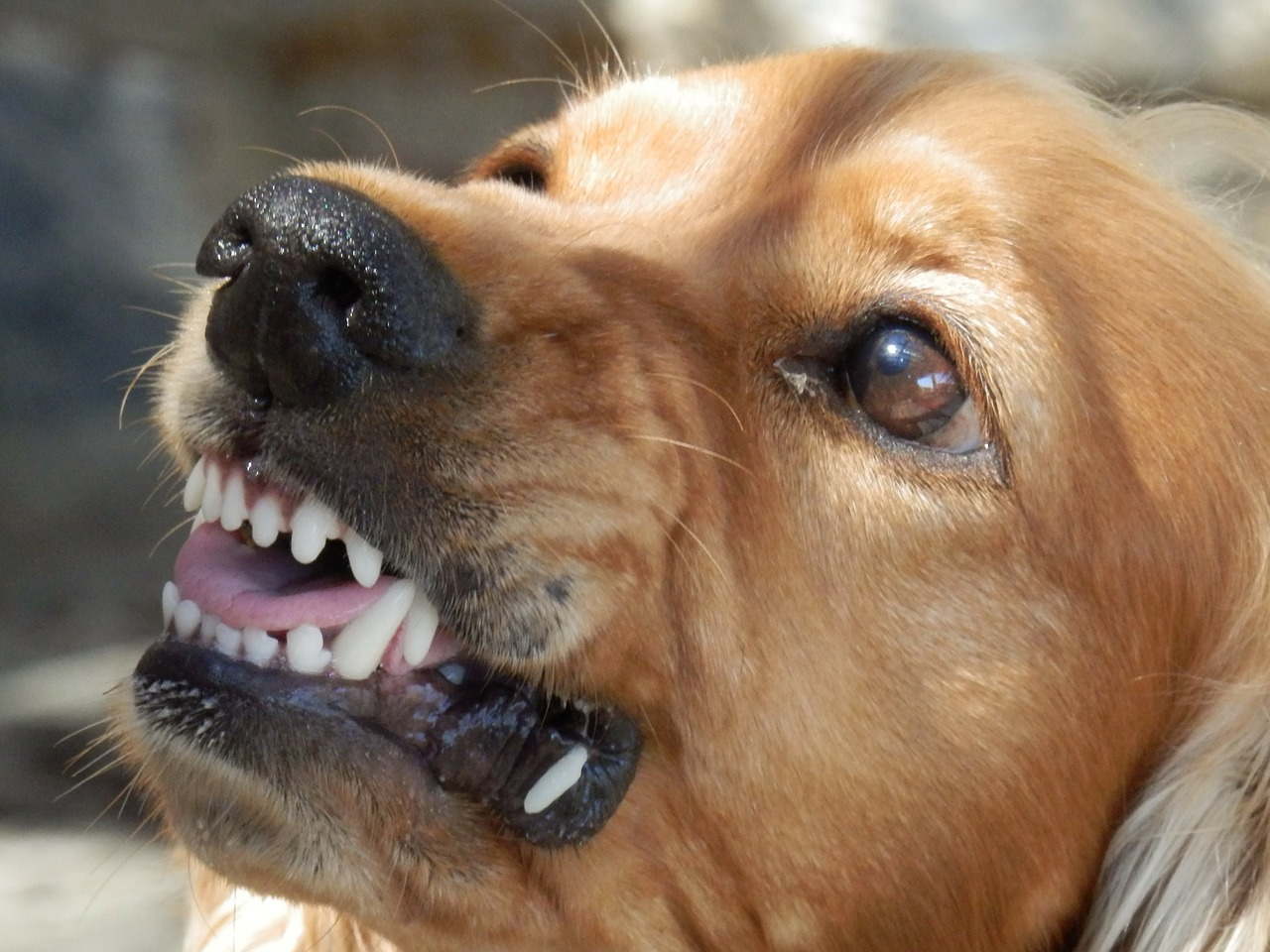 Florida Dog Bite Law: Will Homeowners Insurance Payout?